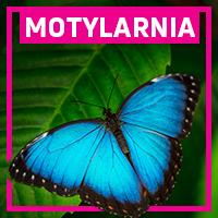 motylarnia_main